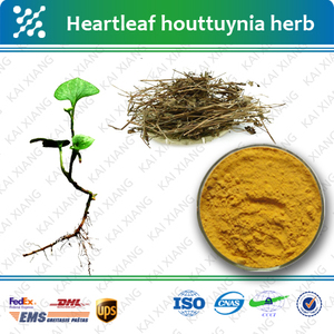 Heartleaf Houttuynia Herb P e , Heartleaf Houttuynia Herb P e
