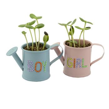 pumpkin grow kit pot with seeds and crystal for diy indoor vegetable garden - Indoor Vegetable Garden Kit