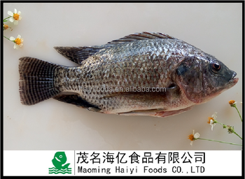 China Export Gutted And Scaled Frozen Black Tilapia Fish Iwp Packing - Buy  China Frozen Tilapia,Tilapia Gutted And Scaled,Tilapia Fish Product on