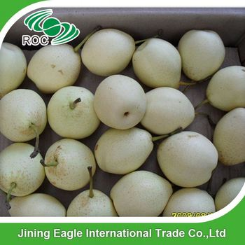 Fresh asian ya pear from hebei province wholesale