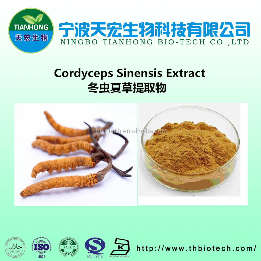 Herbal medicine extract manufacturer supply polysaccharide cordyceps sinensis extract for anti cancer extract