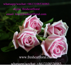 Excellent Freshly Cut Flowers On Sale All The Year In Bulk For Wreath