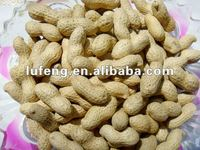 chinese bulk shelled peanuts