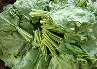 Vegetables - Spinach