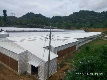 Low cost steel poultry shed broiler poultry farm house for Low cost farm house
