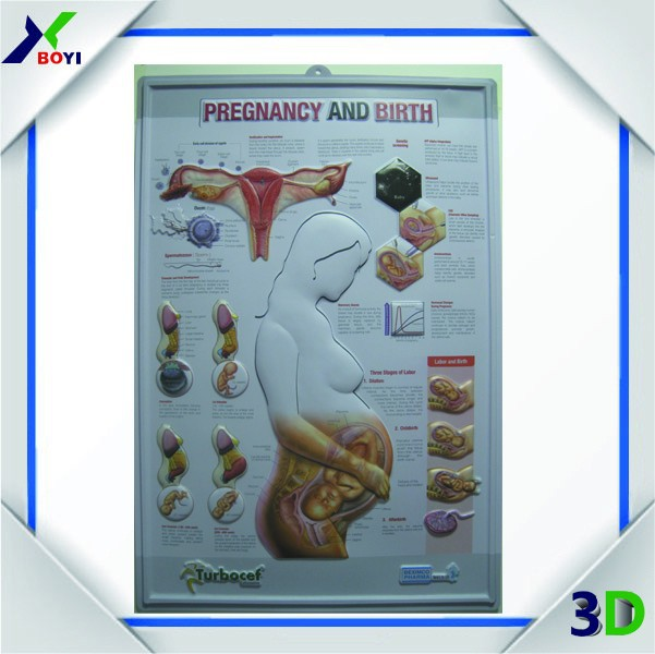 3d Embossed Medical Chart 3d Embossed Medical Chart Suppliers And