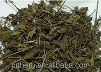 Dried Patchouli Patchouly Pogostemon cablin Pachouli Herba pogostemonis Cablin potchouli herb Huo xiang Chinese medicine
