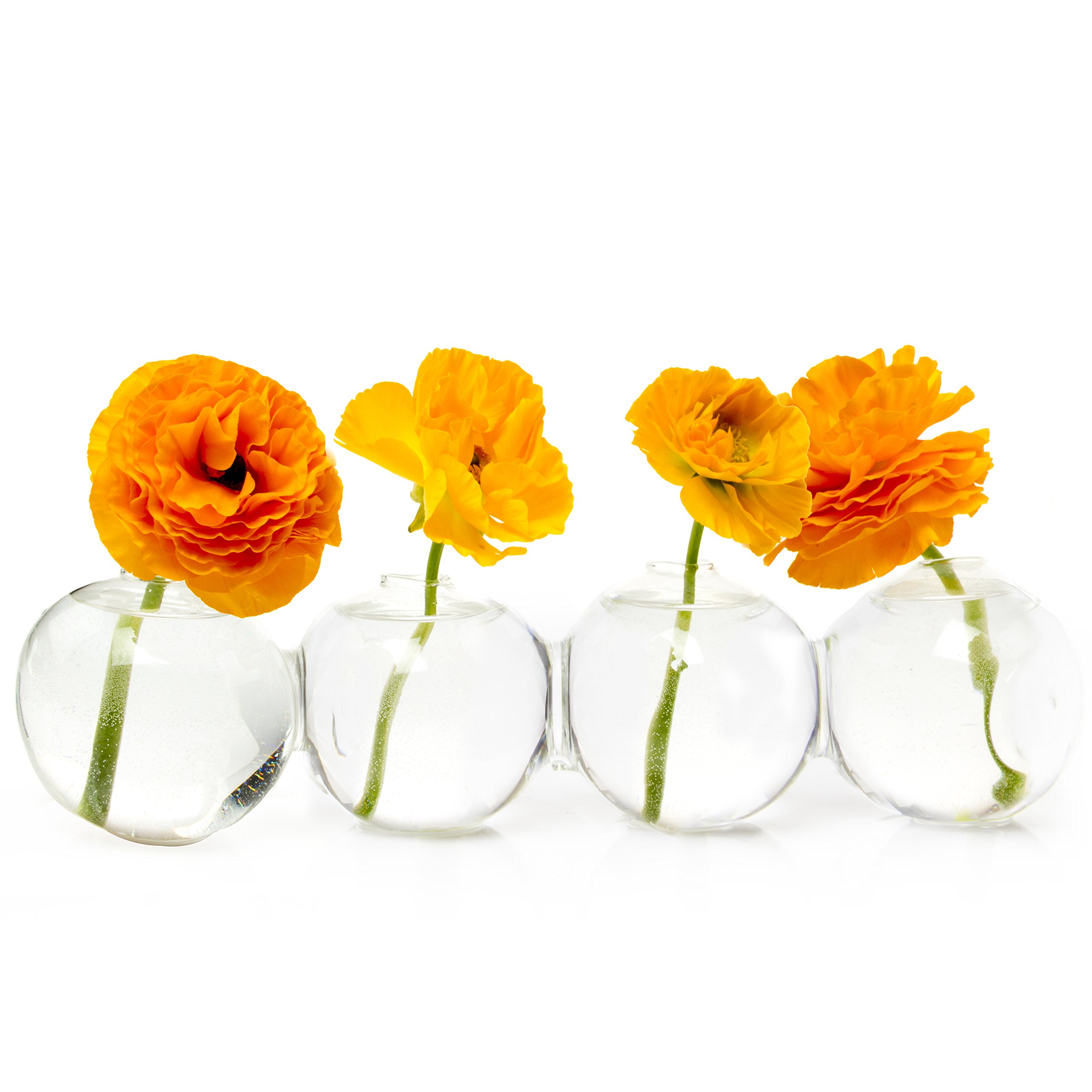 Chive – Big Caterpillar - Large Clear Glass Bud Vase for Short Flowers, Low Sitting Flower Vase, Long Unique Shape Floral Container, Set of 4 Glass Round Connected Balls
