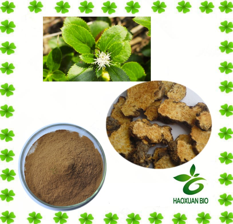 Rhizoma Atractylodis Macrocephalae Extract 10:1 with best quanlity