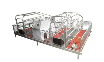 Pig Sow Piglet Piggery Farrowing Crate Gestation Stall