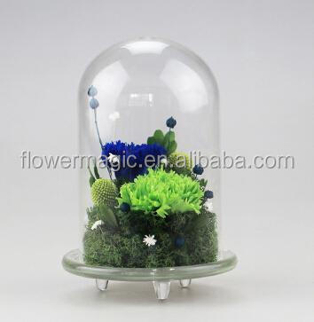 long time lasting Preserved Flower real Immortal carnation Bouquet in glass dome Decorative flower For Home Bonsai morther's day