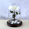 WHITE preserved rose in glass dome