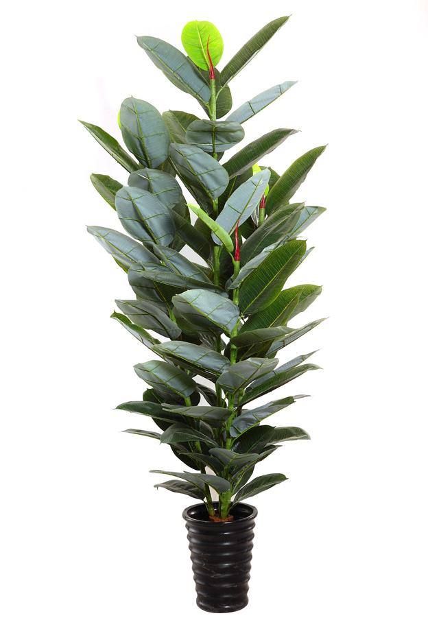 Attirant Indian Rubber Plant,Indian Rubber Tree,Ficus Elastica,Balata,India Rubber  Fig,Rubber Tree   Buy Fake Tree Branches,Fake Tree Branches,Fake Tree  Branches ...