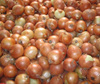 export wholesale bulk chinese fresh red onion