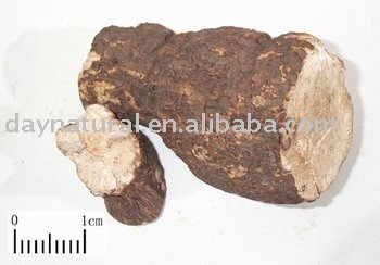 Poria Cocos Extract Powder/indian Buead Extract Powder