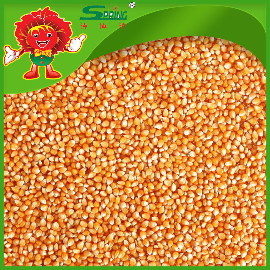 Yellow corn chicken feed grains for sale