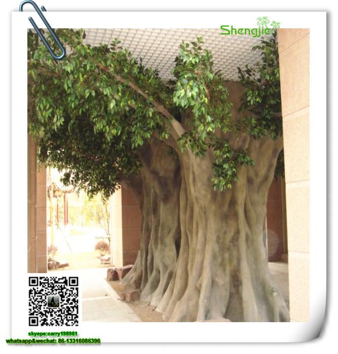 Banyan Tree 23 Jpg