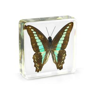 Wholesale Real Acrylic Insect Specimen Embedment Butterfly in Resin Block