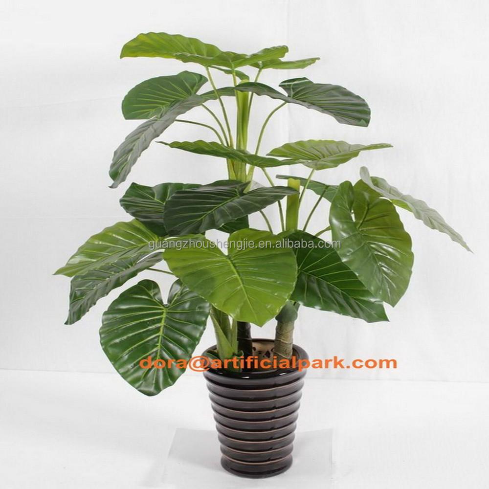 Sjh010659 populaire plantes d 39 ext rieur mexique cactus for Plantes vertes exterieur