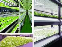indoor plant growth led grow light bulb with high quality