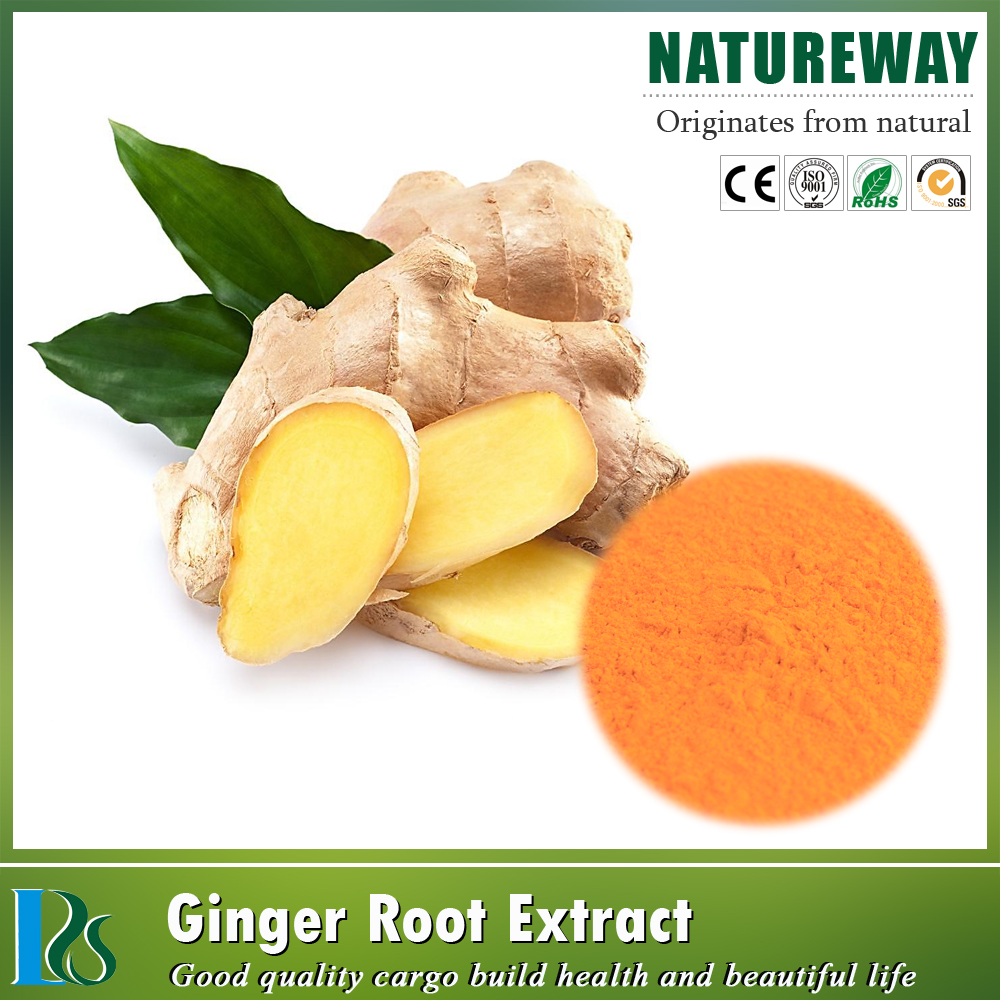 Factory free sample Zingiber officinale extract,ginger extract powder water soluble