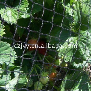 Economic and Reliable knitting vineyard bird netting From China supplier