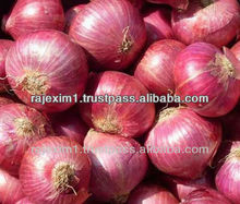 Big Red Onion Price for Hong Kong Market
