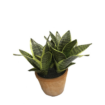 Zeylanica Snake Plant, Mother-In-Law's Tongue - Sanseveria Artificial Succulent Plants with Red Brick Pots