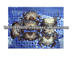 Best Quality Seafood Product Natural Frozen Soft Shell Crab