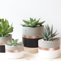 Cylinder Concrete Planter Round Succulents Pots Cement Plant Pot Cacti Decor Housewarmg Gift