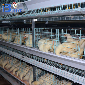 Hot sale poultry farm hot dip galvanized layer chicken cage