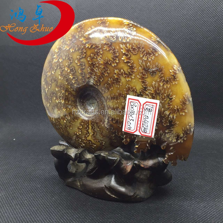 Natural Fossils Conch Mineral For Arts Decoration Gifts