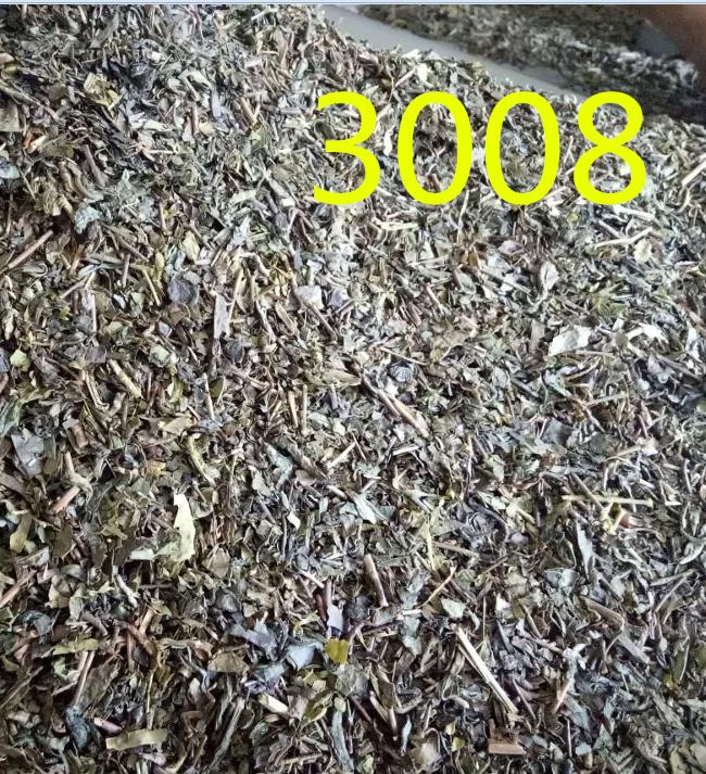 chinese green tea price 3008 Uzbekistan tea - 4uTea | 4uTea.com