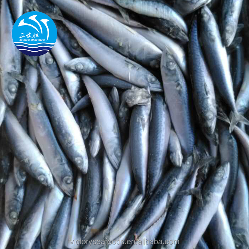Sea Frozen Blue Mackerel Fish 200-250g