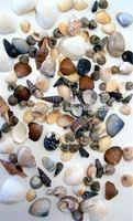 Sea Shells Handicraft Production