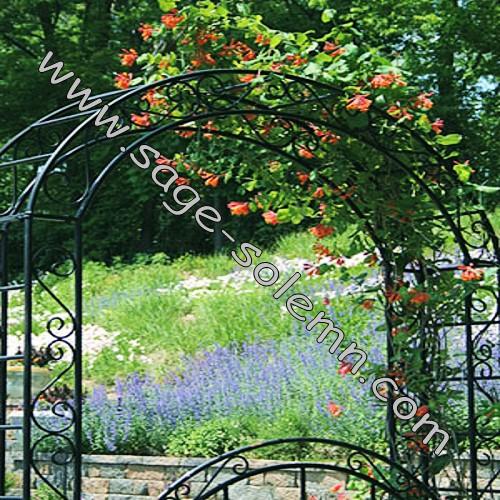 Metal Rosa Arco Arco de flores