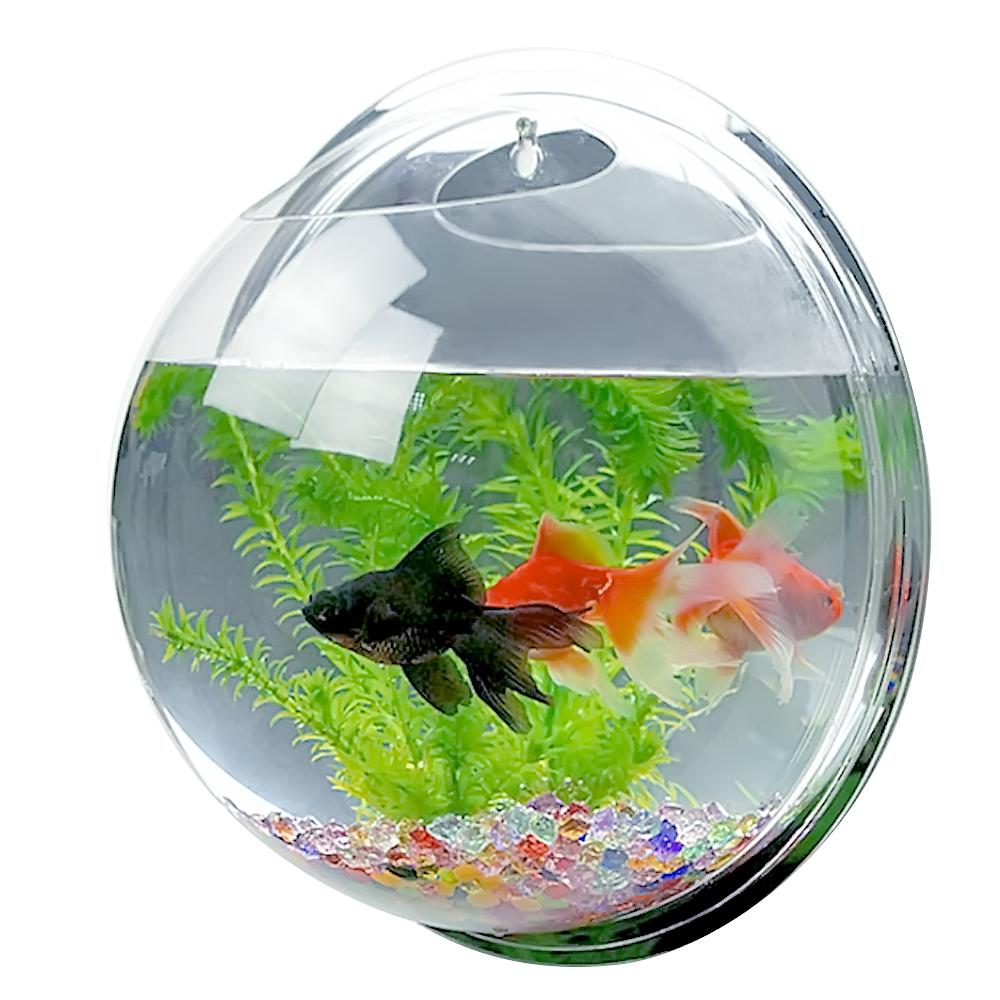 Fish aquarium price in pakistan - Fish Aquarium Price In Pakistan