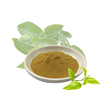 Wholesale Free Sample Organic Instant Extract Green Tea Powder For Drink