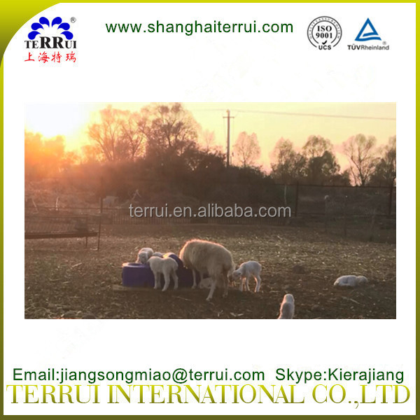 Automatic plastic livestock drinking trough for sheep/goat/horse/cattle/cow/camel/donkey/deer
