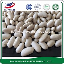 Best Price Agriculture Products Egyptian White Kidney Beans