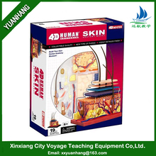 4D human anatomy model for education / human anatomical skin model toy