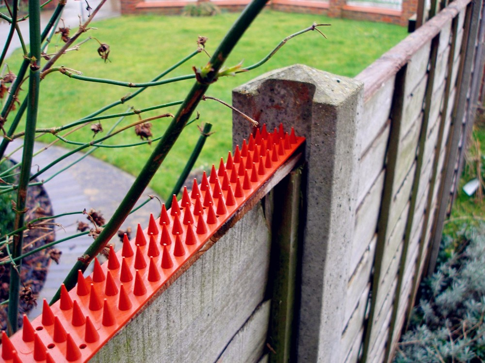 Cat Repeller Bird Repeller Plastic Fence Wall Spikes Buy