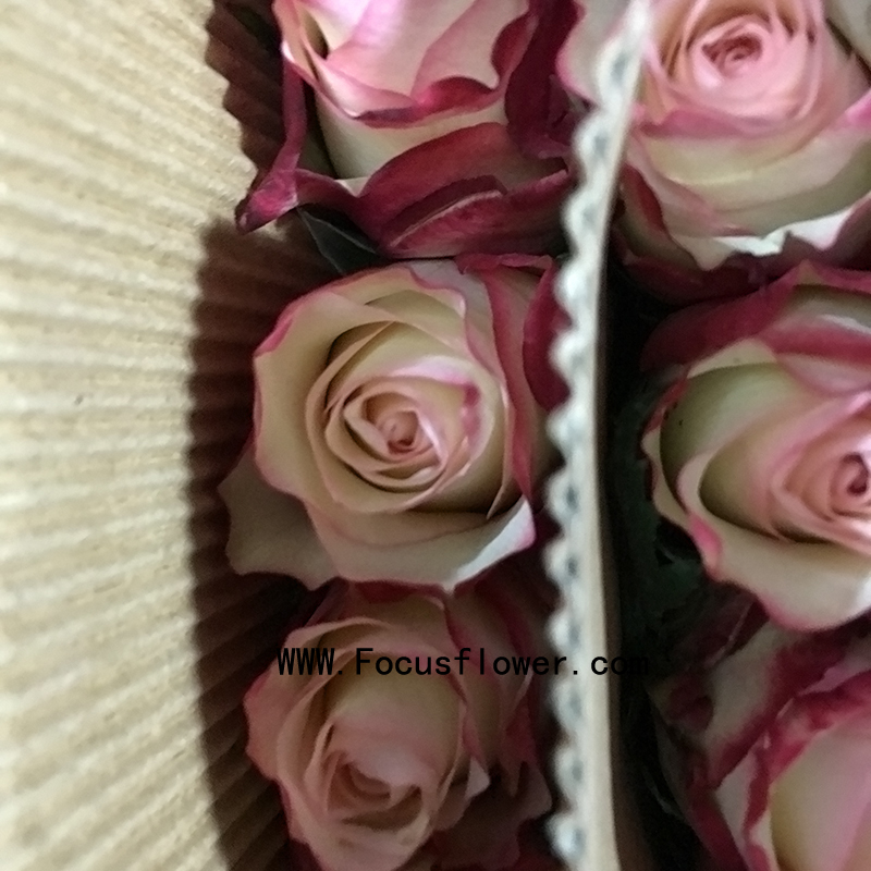 Chinese Style Foam Flowers With 20stems/Bundle Big Rose Flowers Molti-Colo Rose Vermilion Border From Focus/China