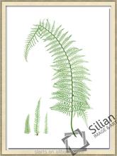 Yeşil Yaprak Boyama Tanıtım Promosyon Yeşil Yaprak Boyama Online