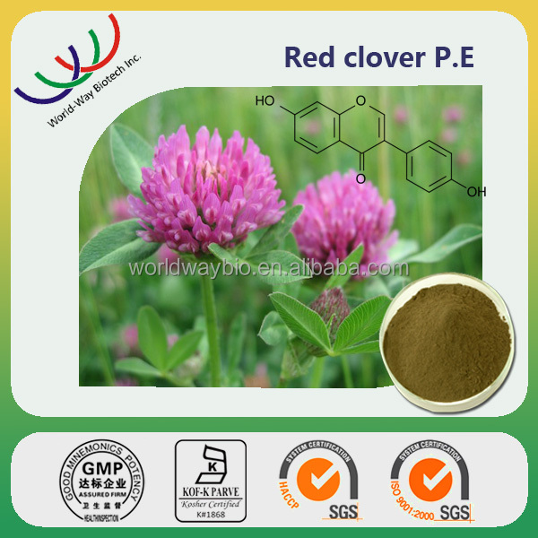 China manufacturer supply natural herb extrat 40% isoflavones red clover extract / p.e.