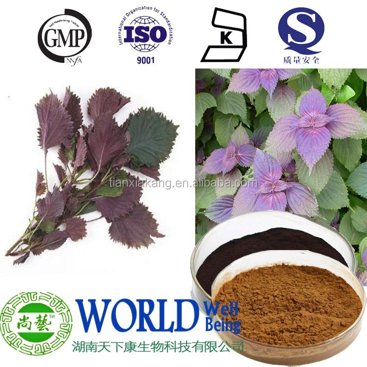 Perilla Leaf Extract 10:1 20:1 Folium Perillae Extract nature Perilla Leaf powder extract