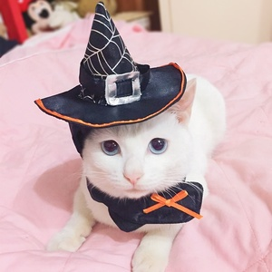 Dog Cat Halloween Hat Costume Pet Apparel Holiday Dog Cosplay Clothes Wholesale Wizard Hat for Cat