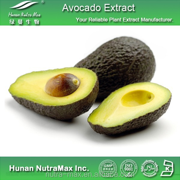 Herb Extract Alligator Pear P.E./Persea americana P.E./Avocado P.E.