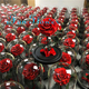 Japan factory iFan Flower preserved real rose flower in glass dome best quality