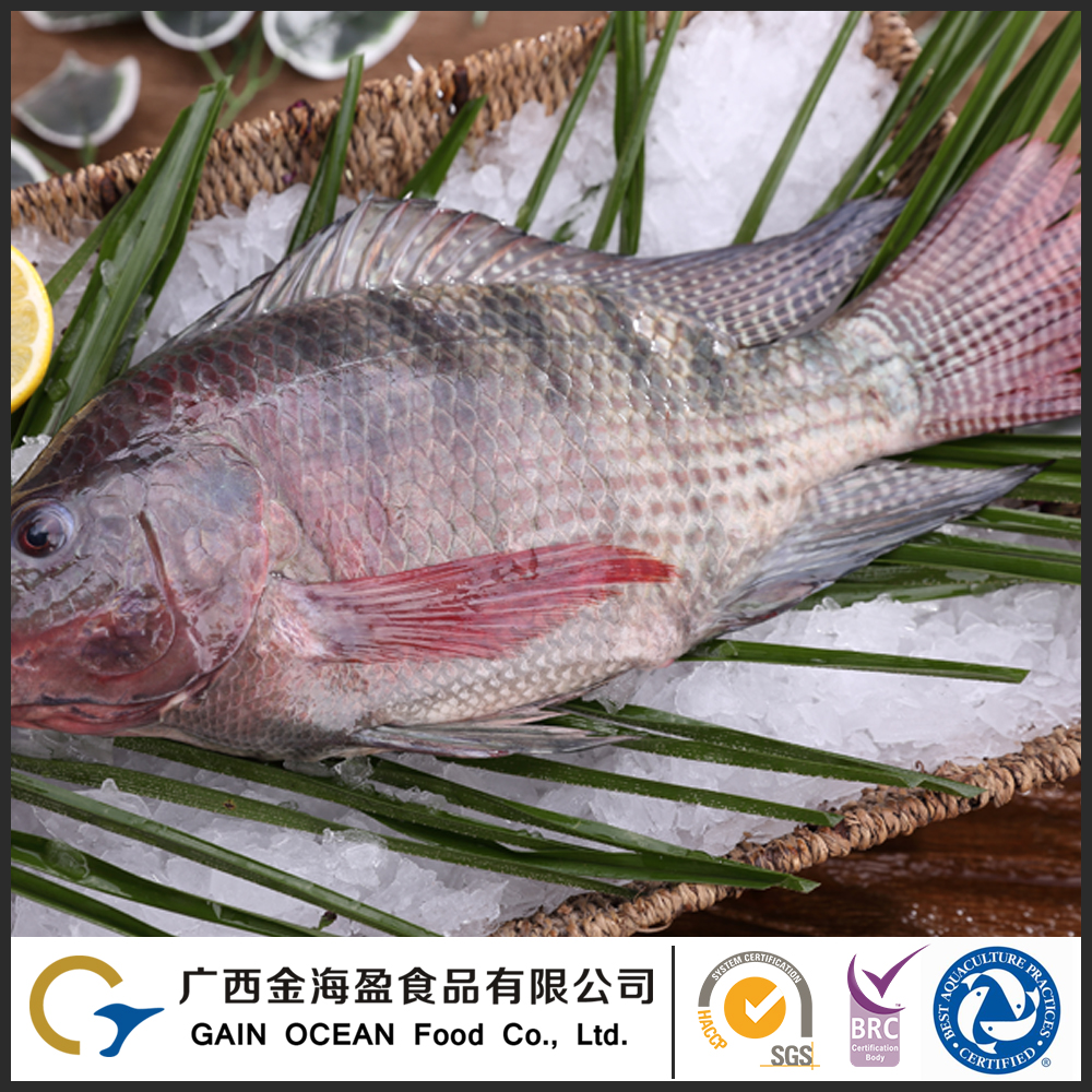 Frozen Whole Fish Farm Raised Tilapia In China